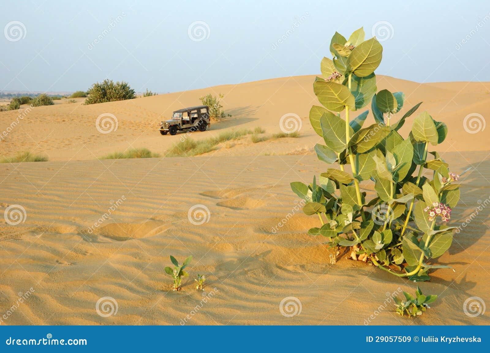 De safari van Jeep in de woestijn van Thar, Rajasthan, India