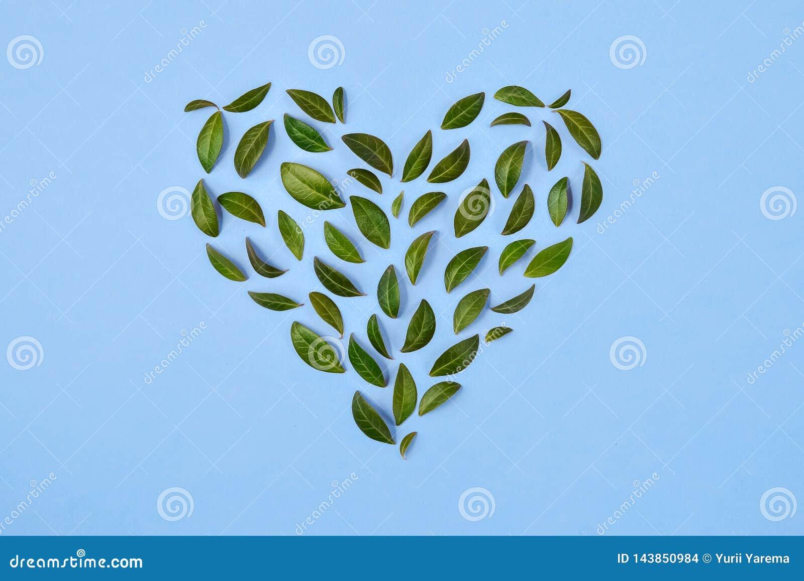 De samenstelling van de zomer Groene bladeren die in hartvorm worden geschikt over blauwe achtergrond Het concept van de liefde V