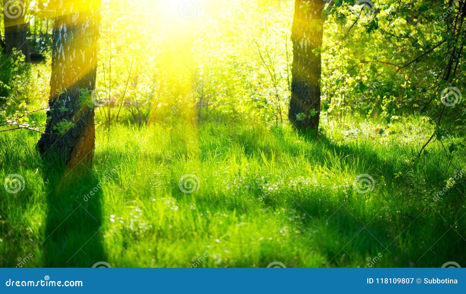 De scène van de de lenteaard Mooi landschap Park met groen gras