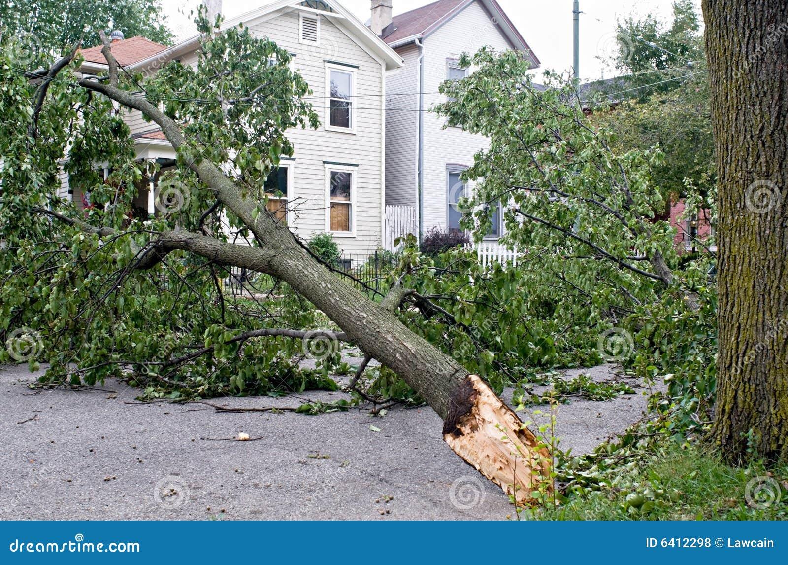 De Schade van de wind