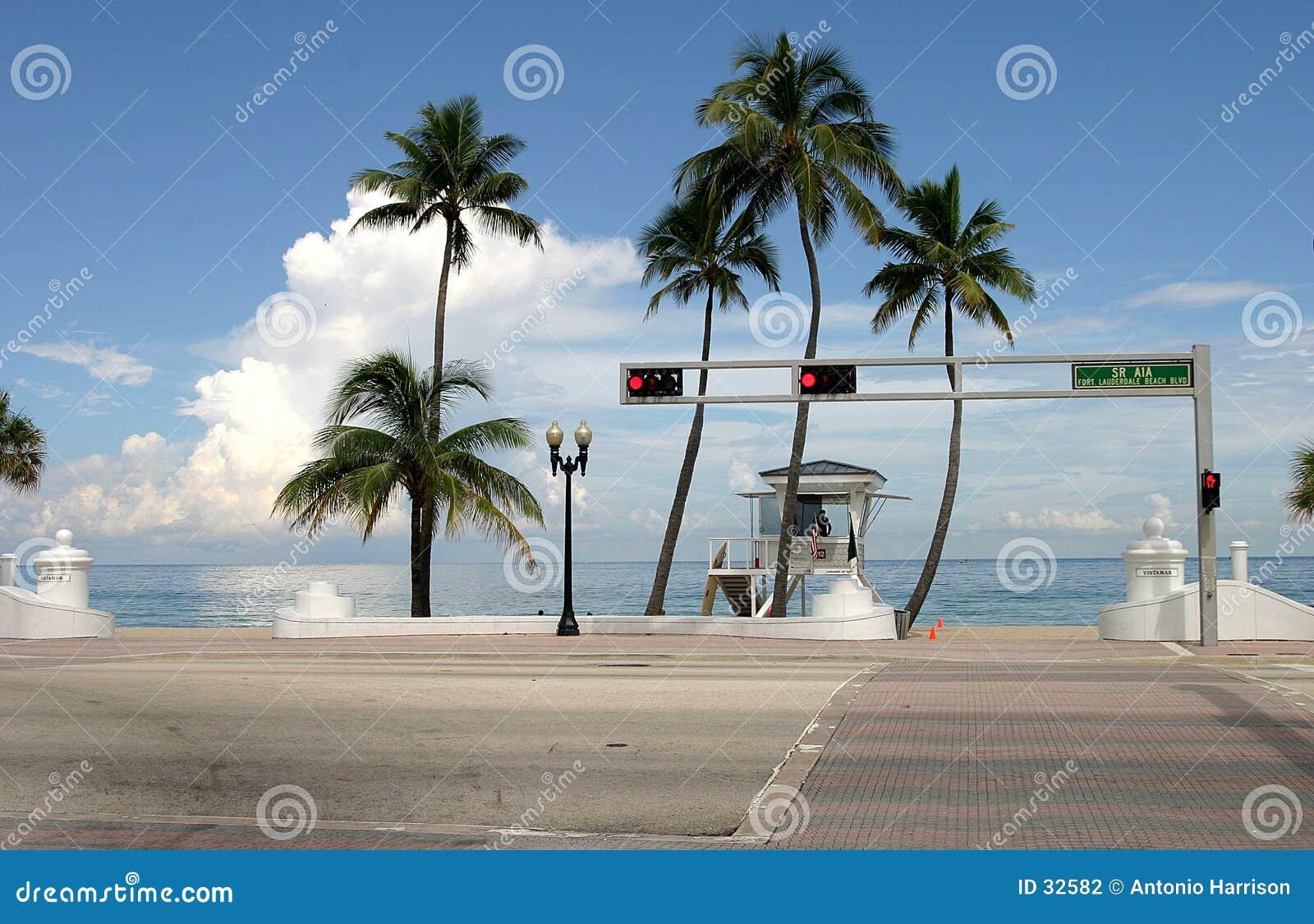 De schaduw van de palm