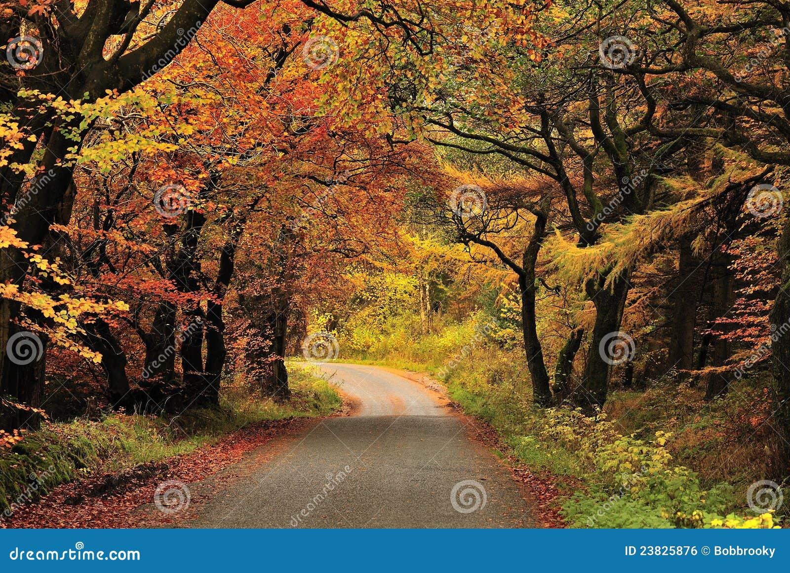 De schaduwen van de herfst, Gisburn bos, Lancashire