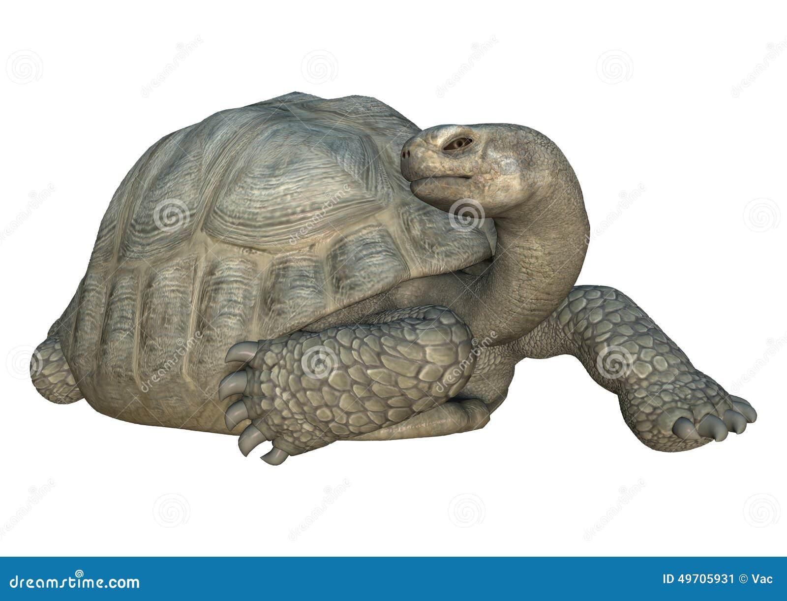 De schildpad van de Galapagos