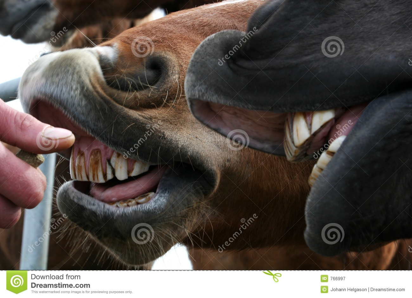 De schoonmakende tanden van het paard