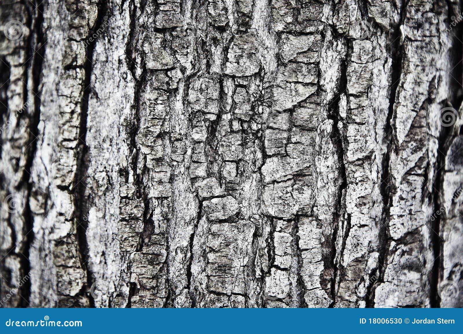 De schors van de boom stock foto afbeelding bestaande uit contrast 18006530 - Deksel van de boom ...