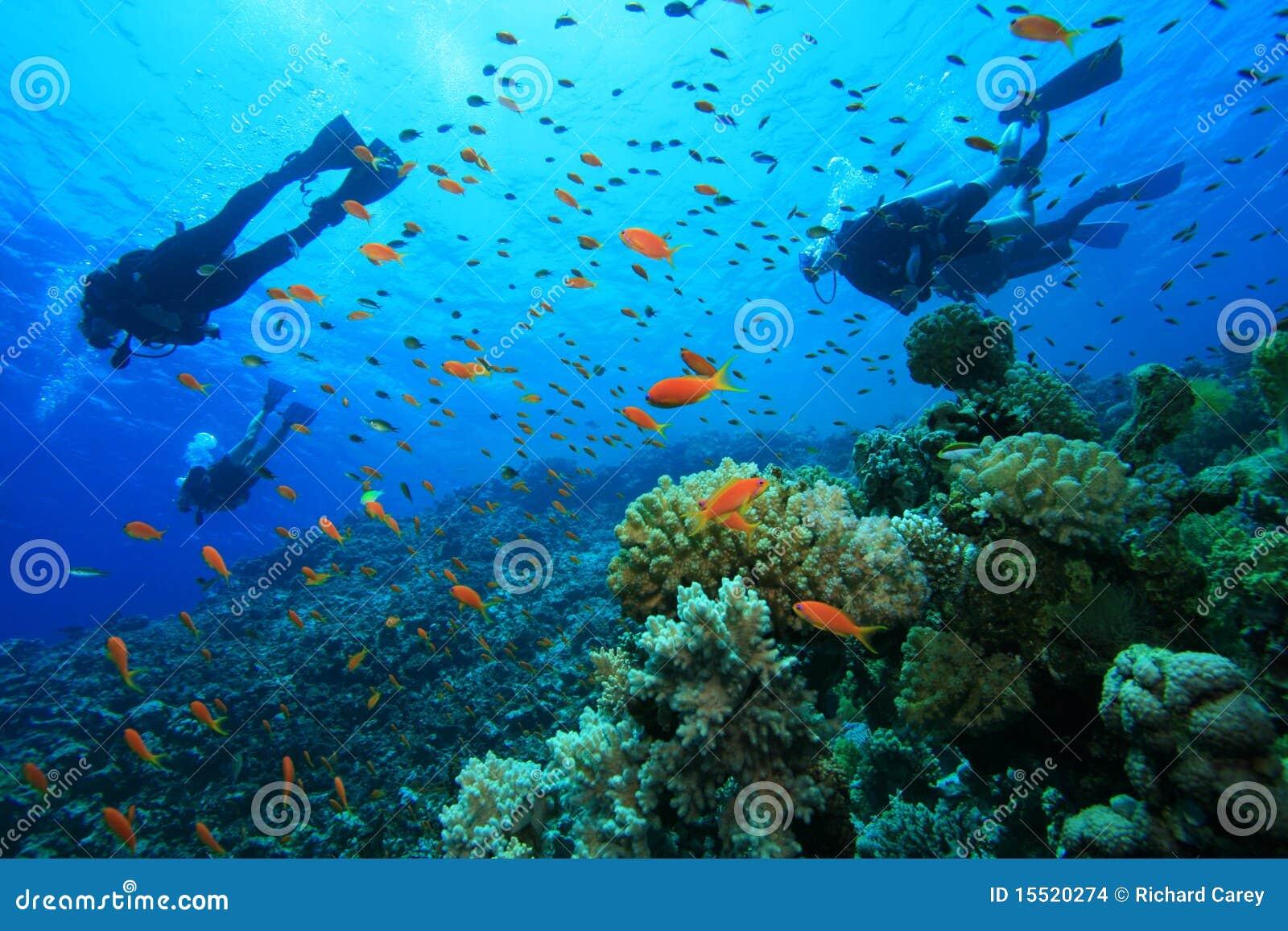 De scuba-duikers onderzoekt koraalrif