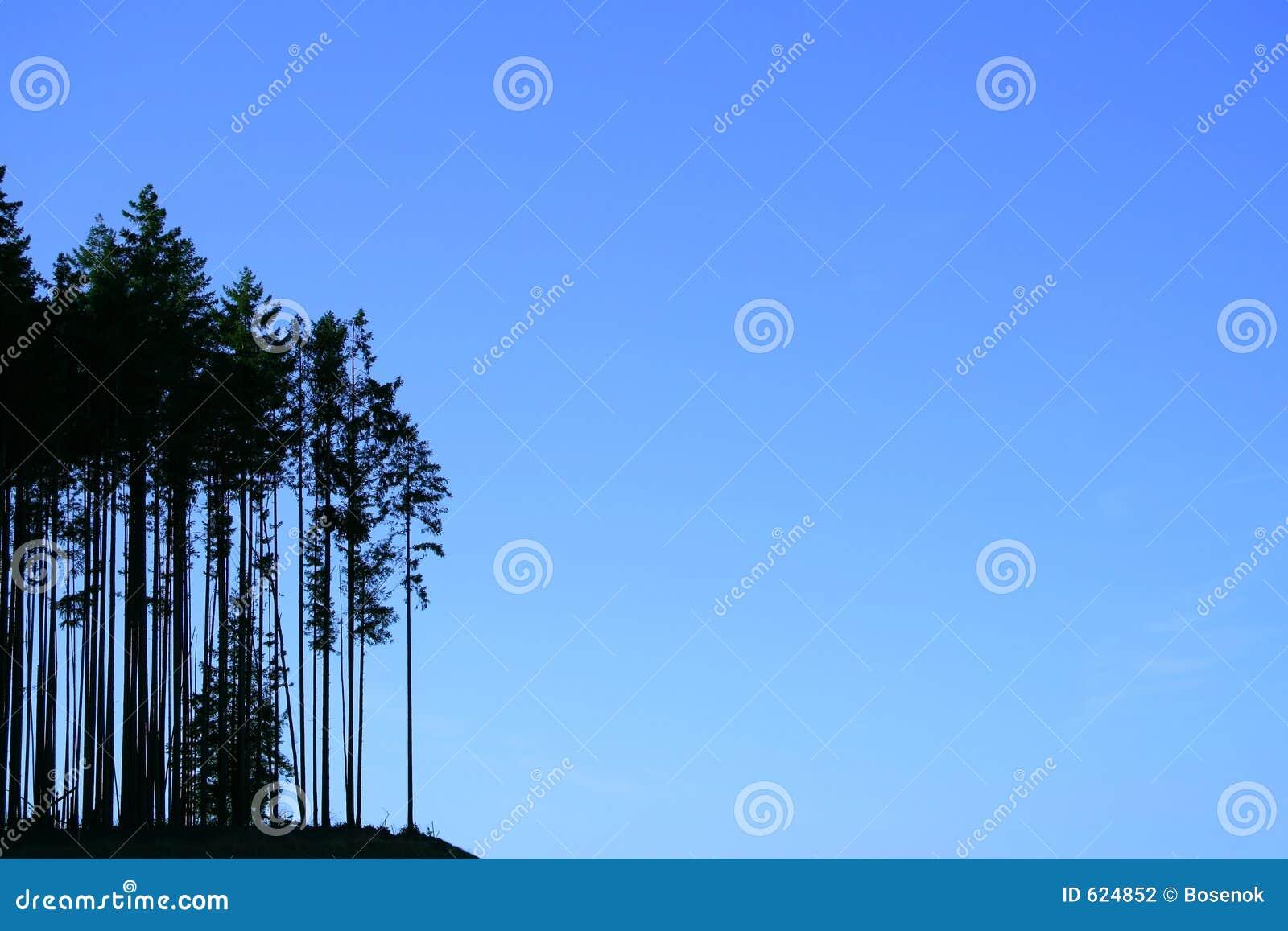 De silhouetten van de boom