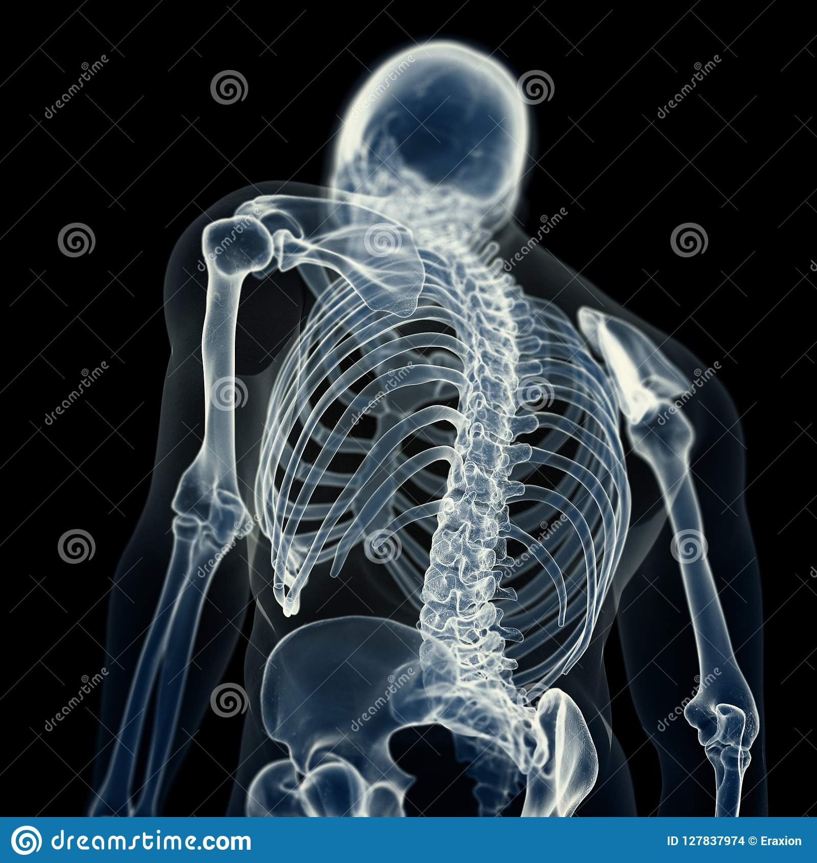 De skeletachtige rug