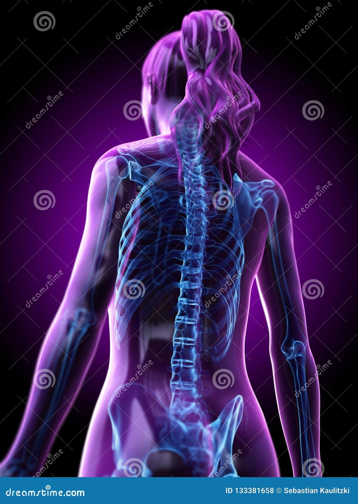 De skeletachtige rug van een vrouw