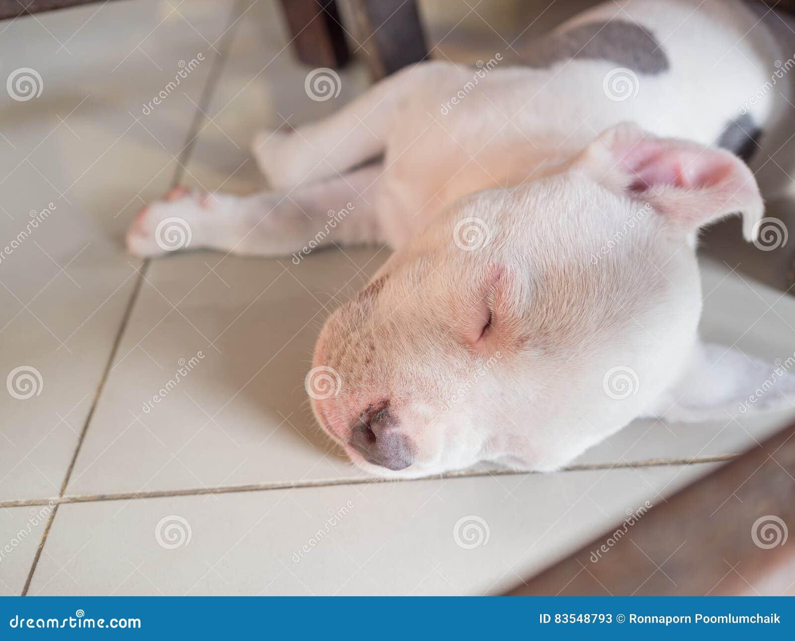 De slaap van de puppyhond op betegeld