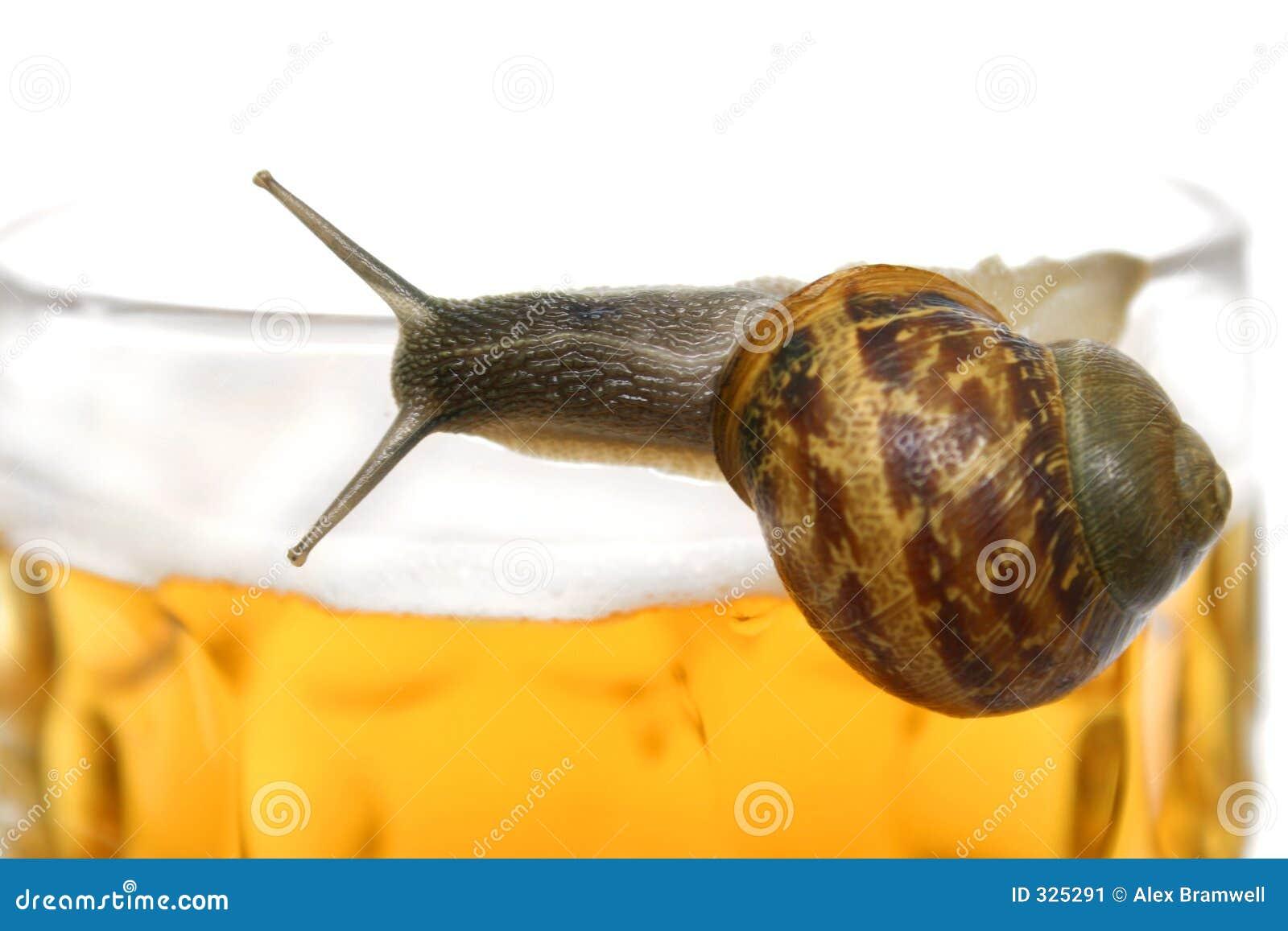 De Slak van het bier