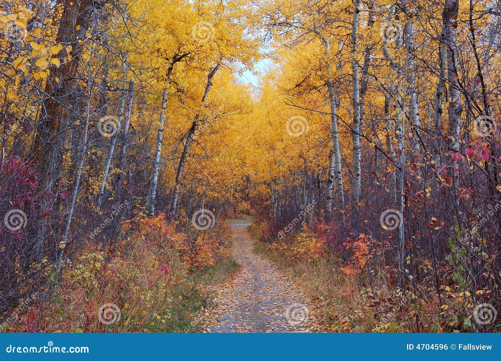 De sleep van de wandeling in de herfstbos