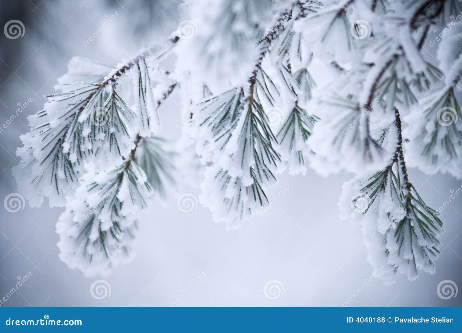 De sneeuw behandelde bladeren in de winter