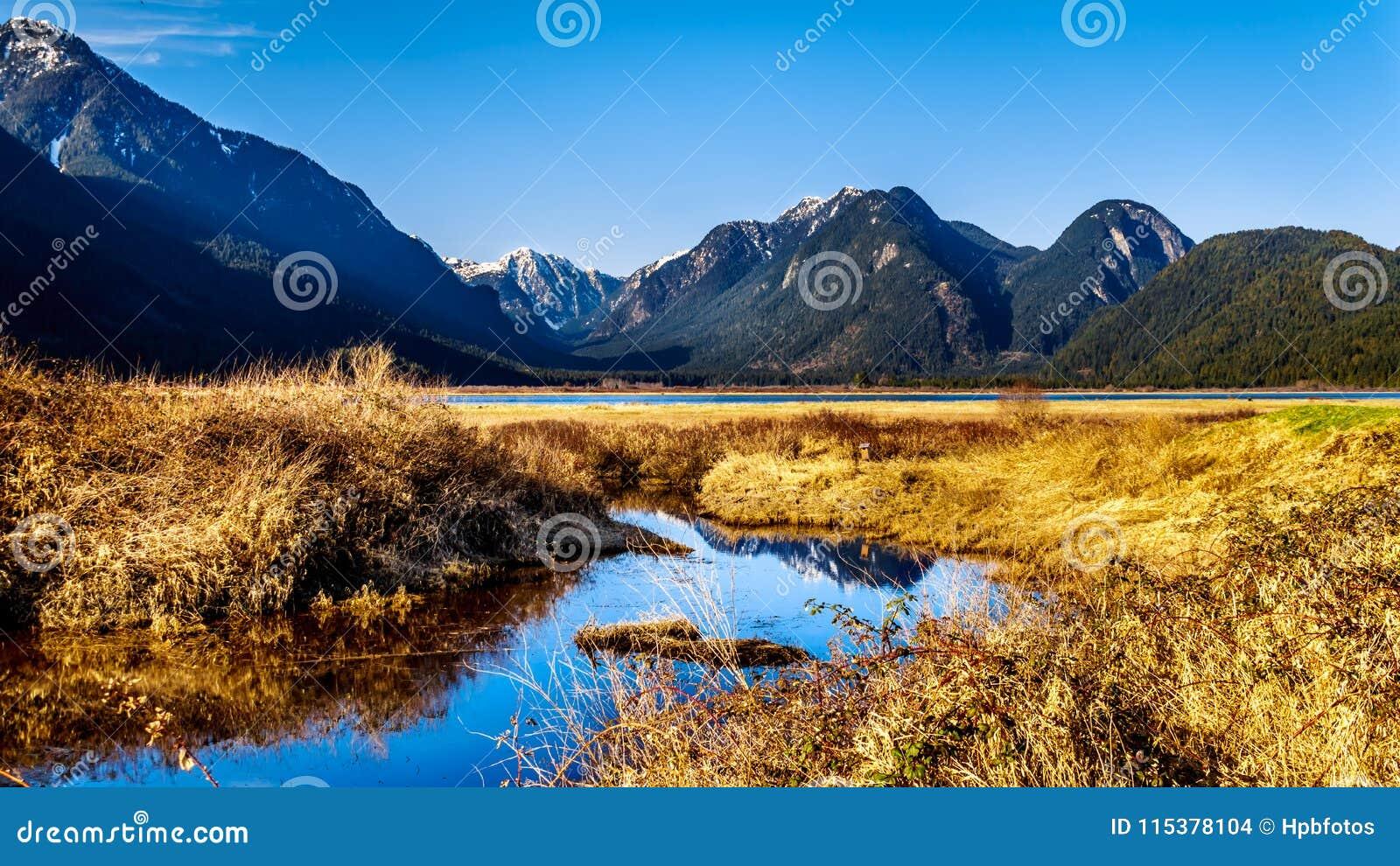 De sneeuw behandelde pieken van de Kustbergen die Pitt River en Pitt Lake in Fraser Valley van Brits Colombia Canada omringen
