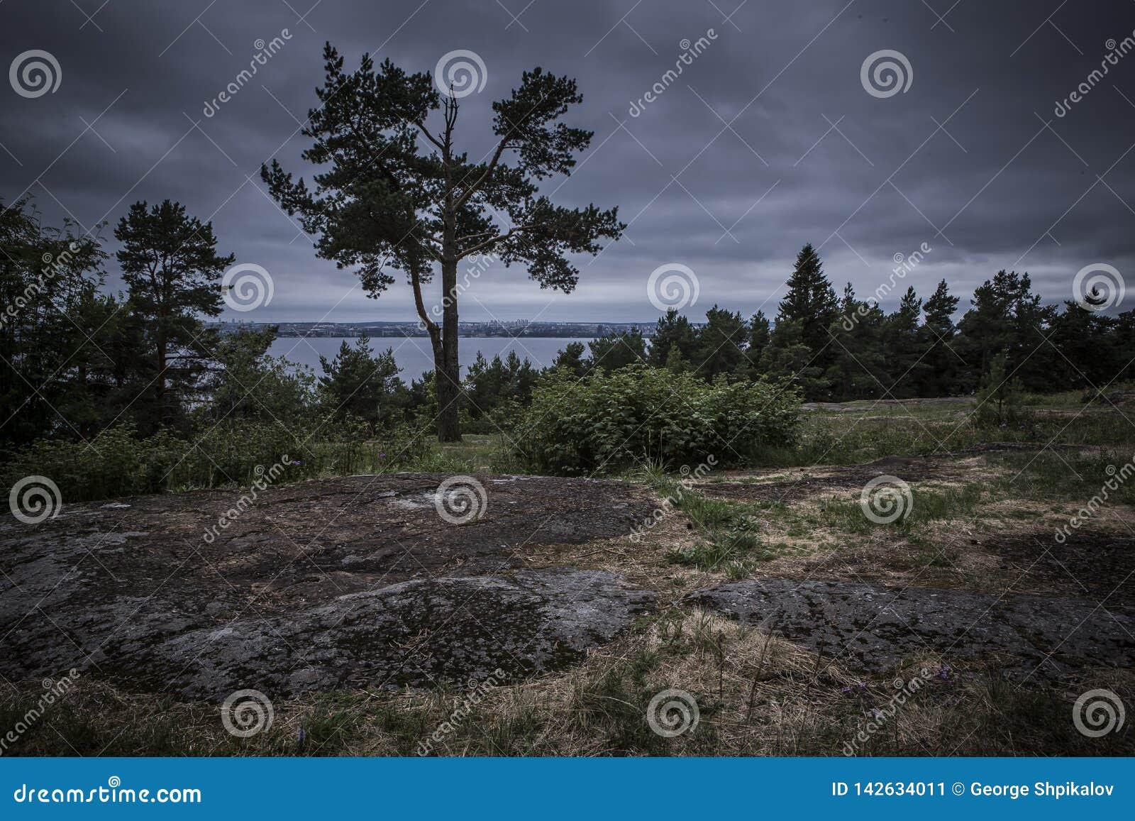 De sparren op de rand van het hout tegen stormachtige hemel overzien meer en de stad in de afstand