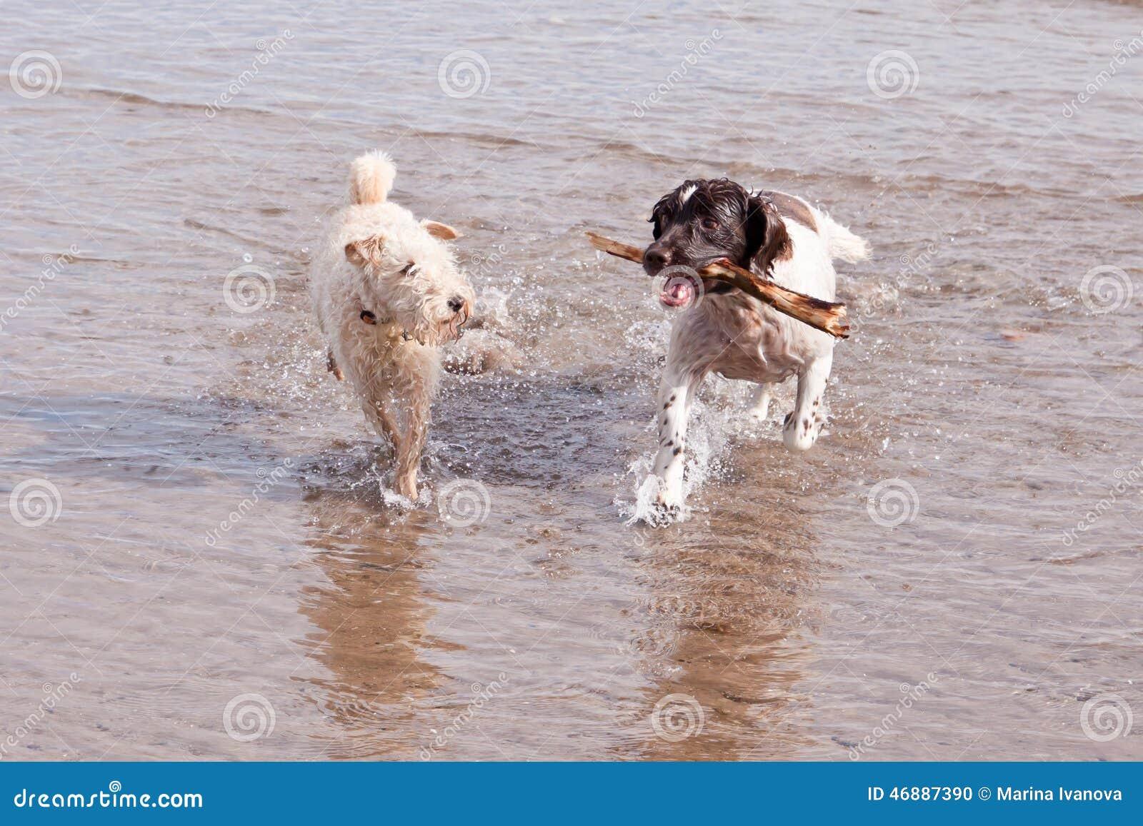 De speelse Stok van het Strand van Honden