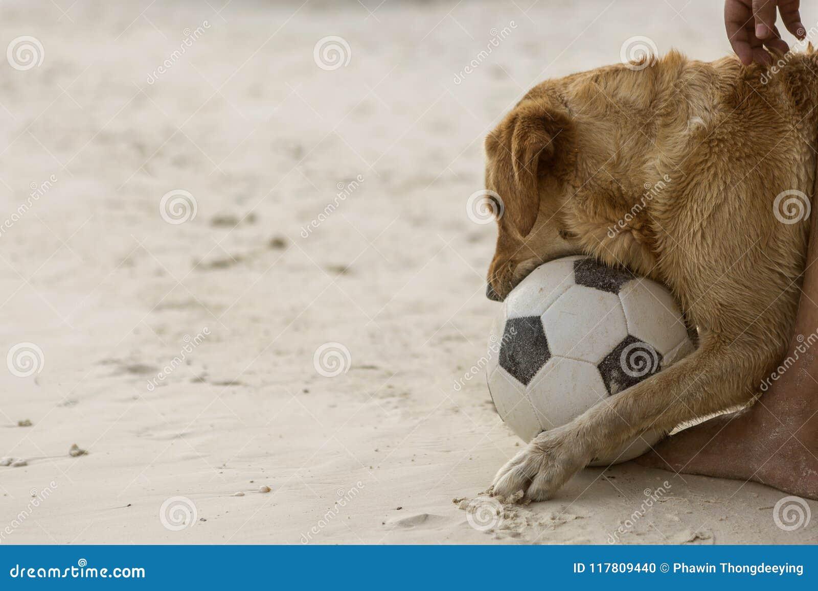 De speelvoetbal van de hond