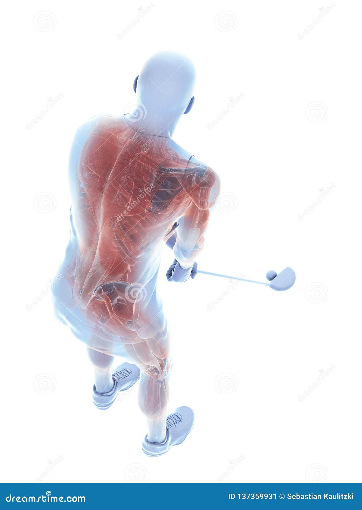 De spieren van een golfspeler