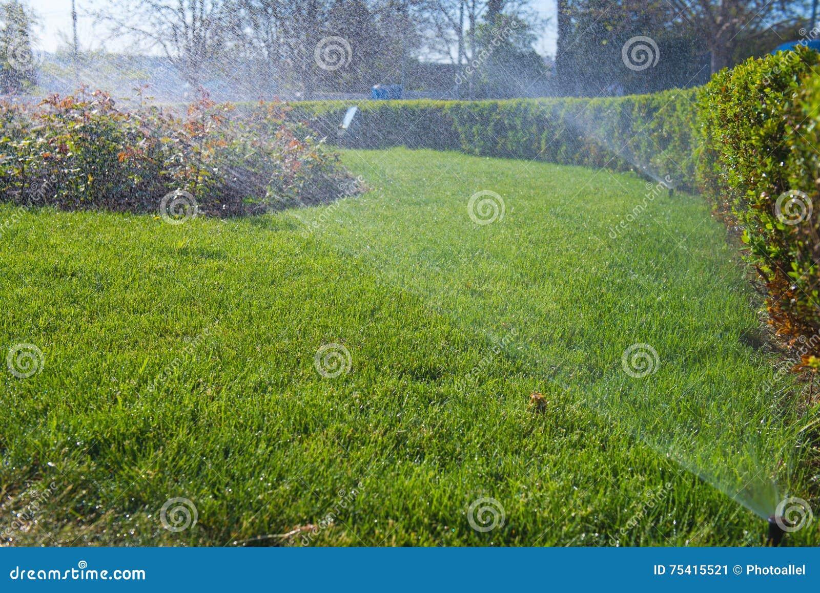 Gras In Tuin : Groen gras gras tuin in ochtend u stockfoto sutichak