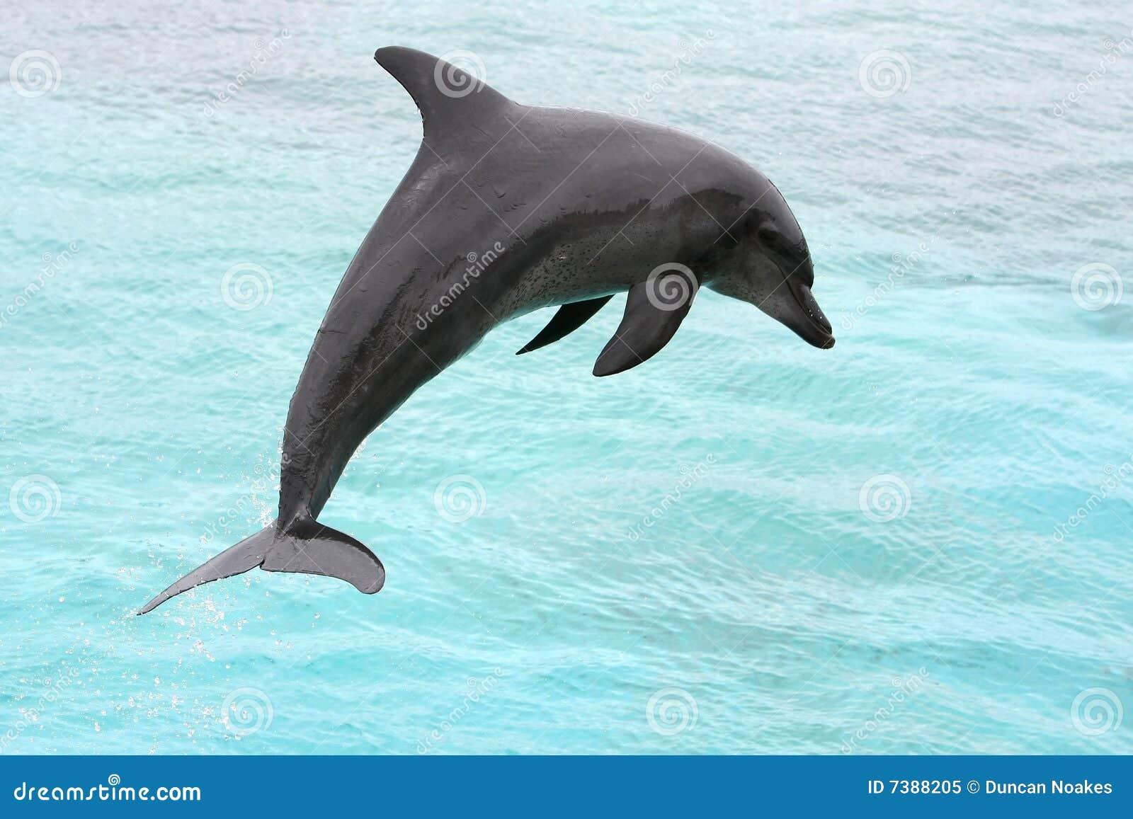 De Sprong van de dolfijn