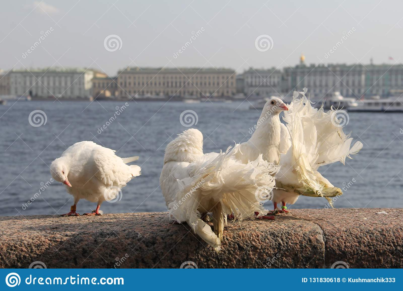 De stadsvogels hebben een rust
