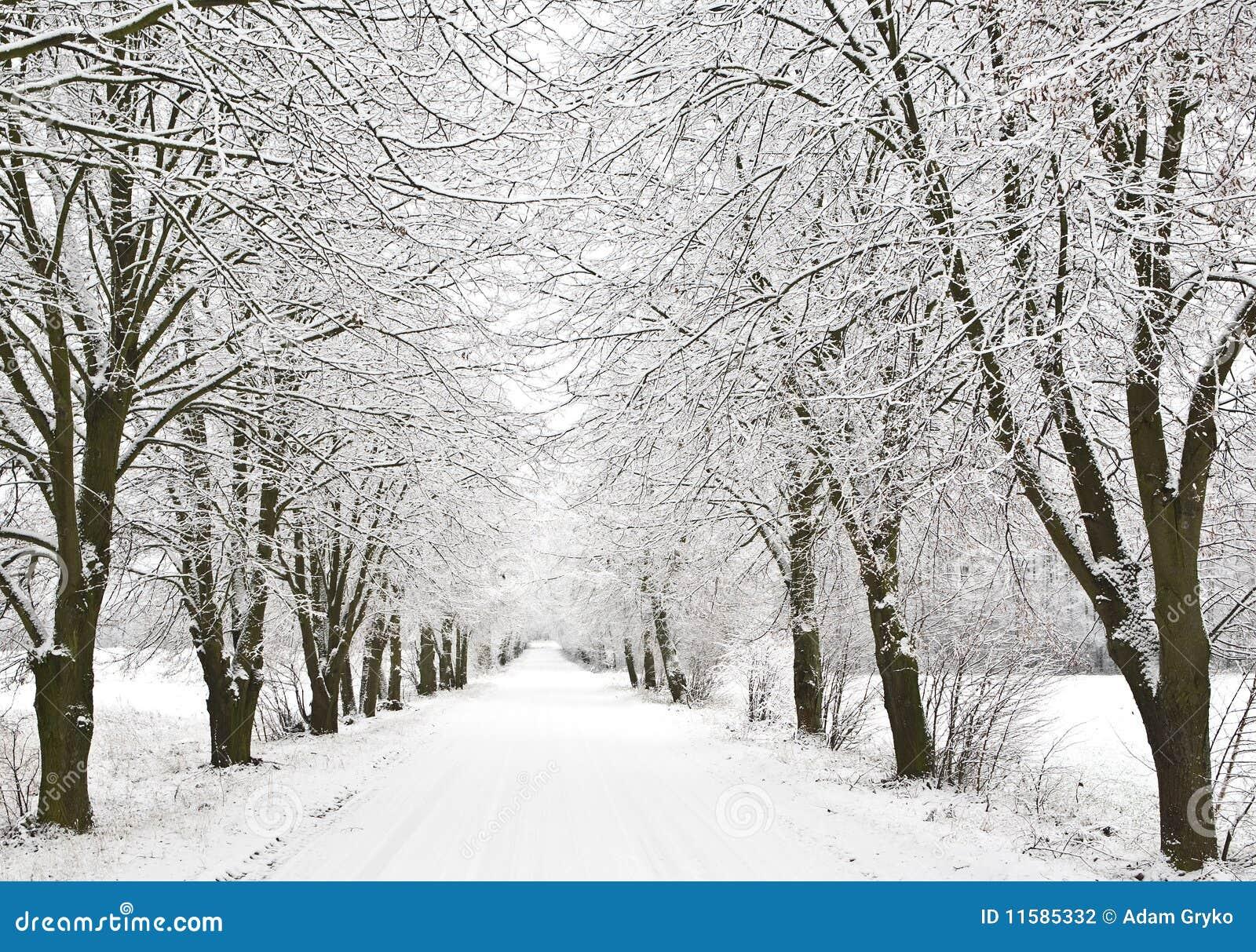 De steeg van de sneeuw