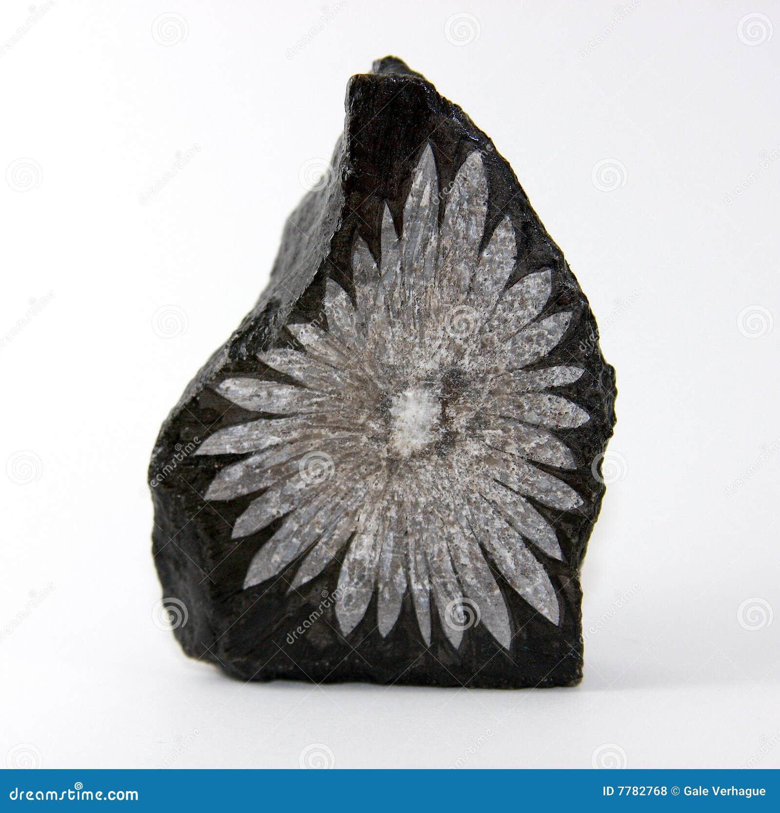De Steen van de chrysant