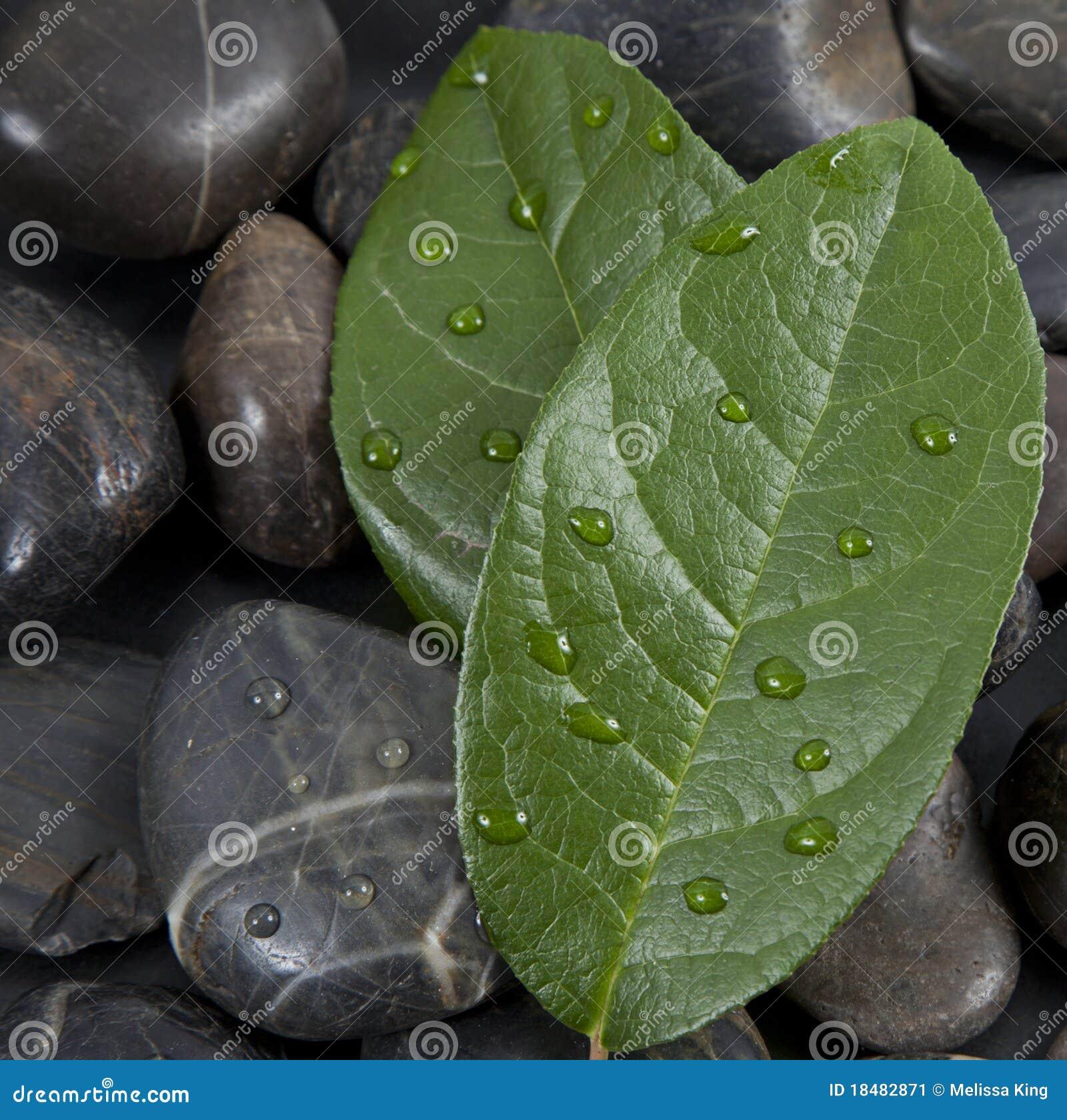 De stenen en de bladeren van Zen met water