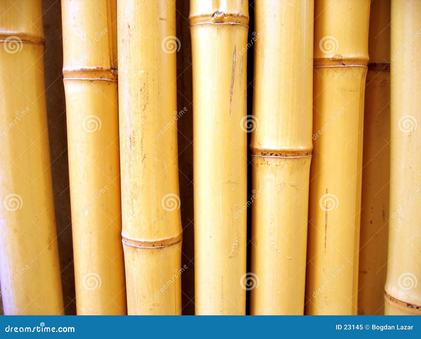 De stokken van het bamboe