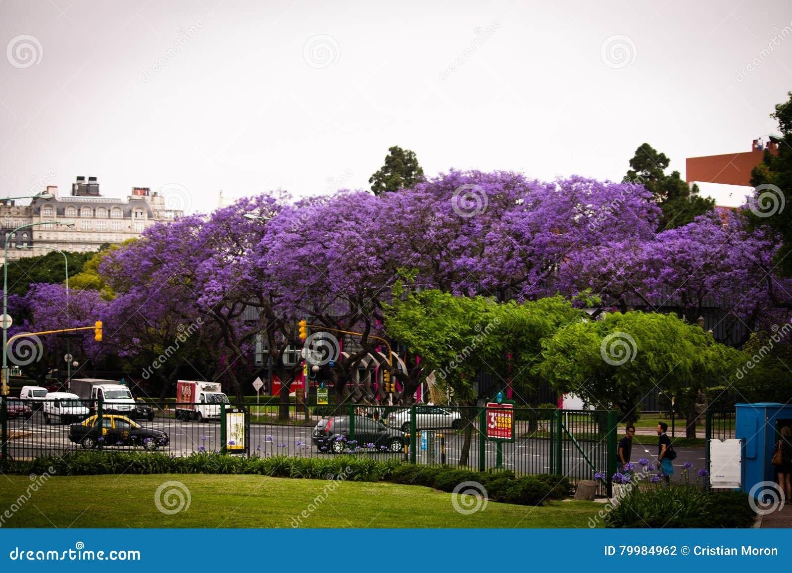 De straat van Buenos aires