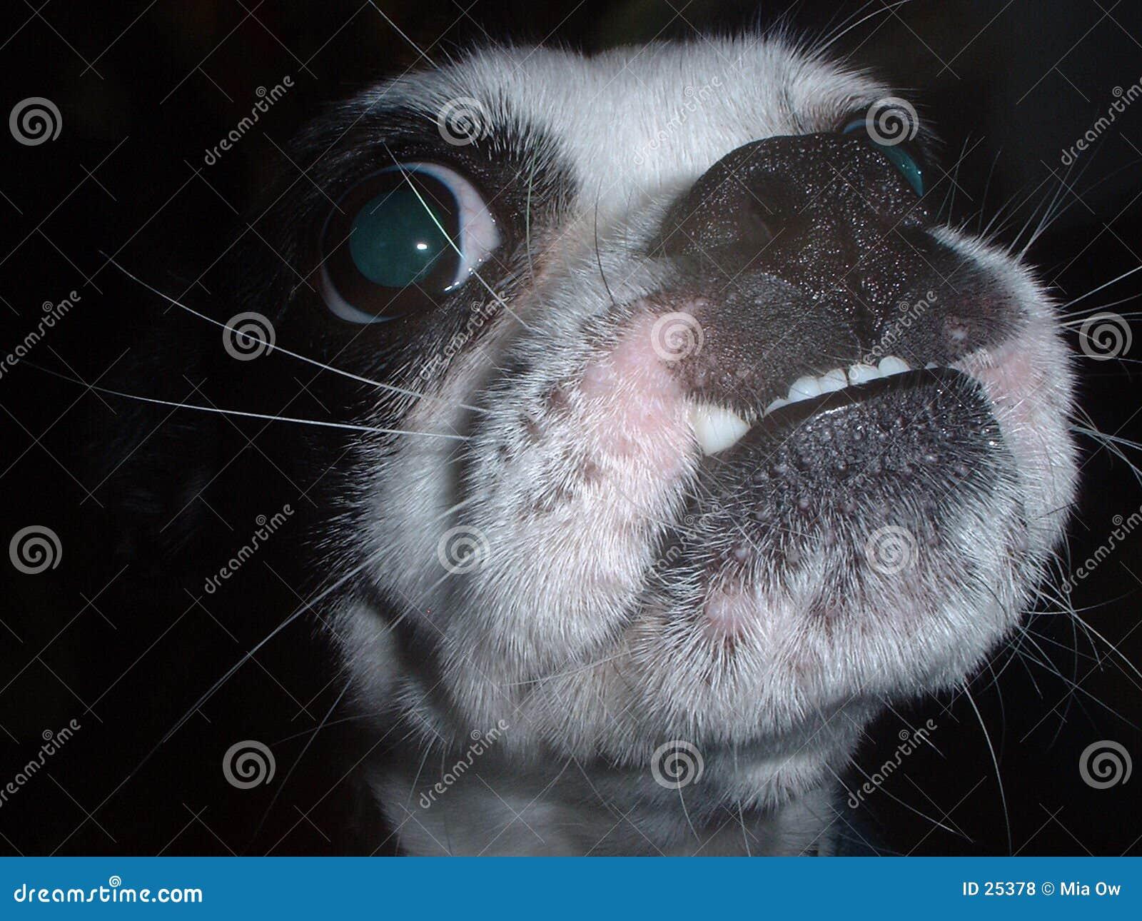 De Straathond van Underbite
