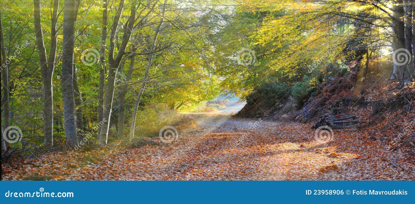 De stralen die van de zon in het bos binnengaan