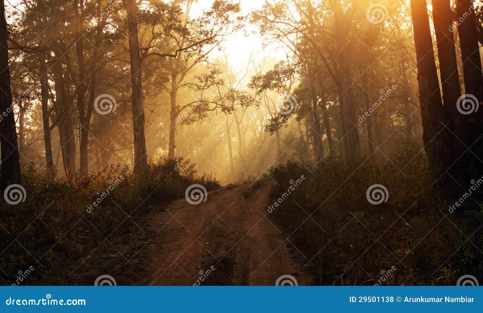 De stralen van de zon binnen een nevelig bos tijdens dageraad