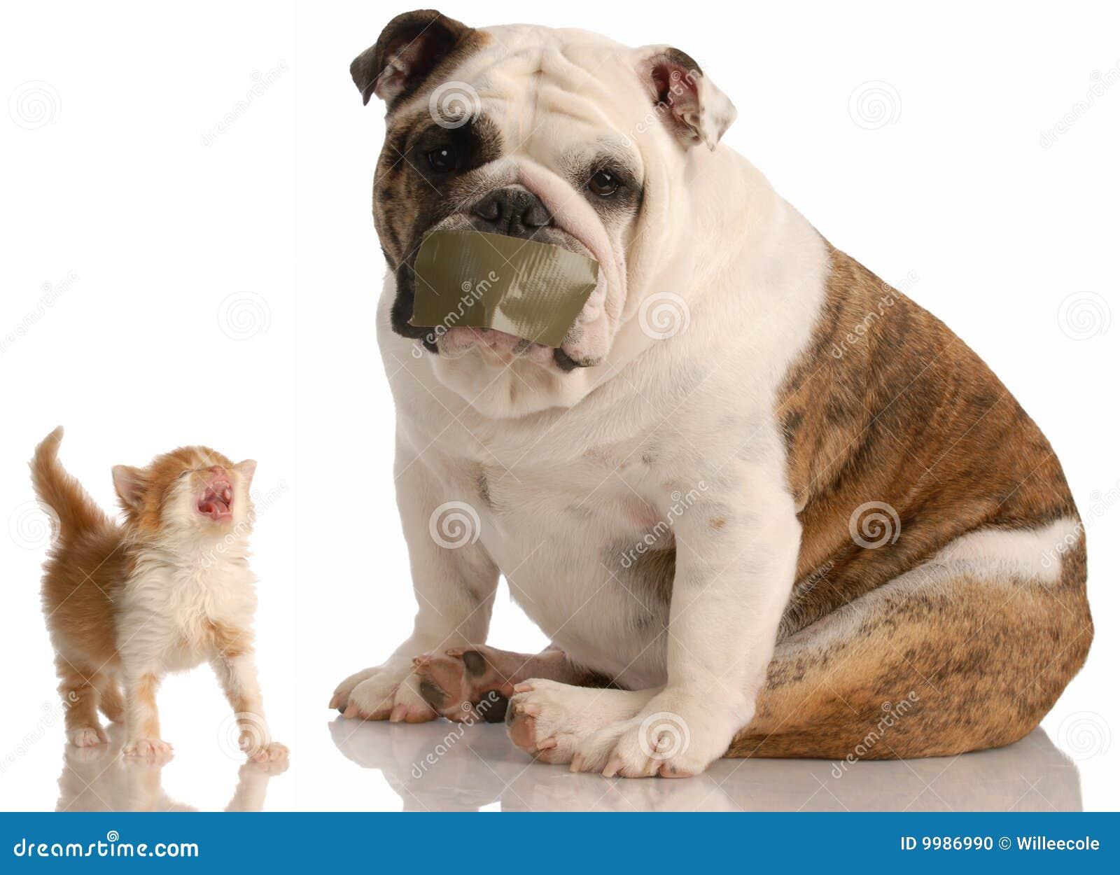 De strijd van de hond en van de kat