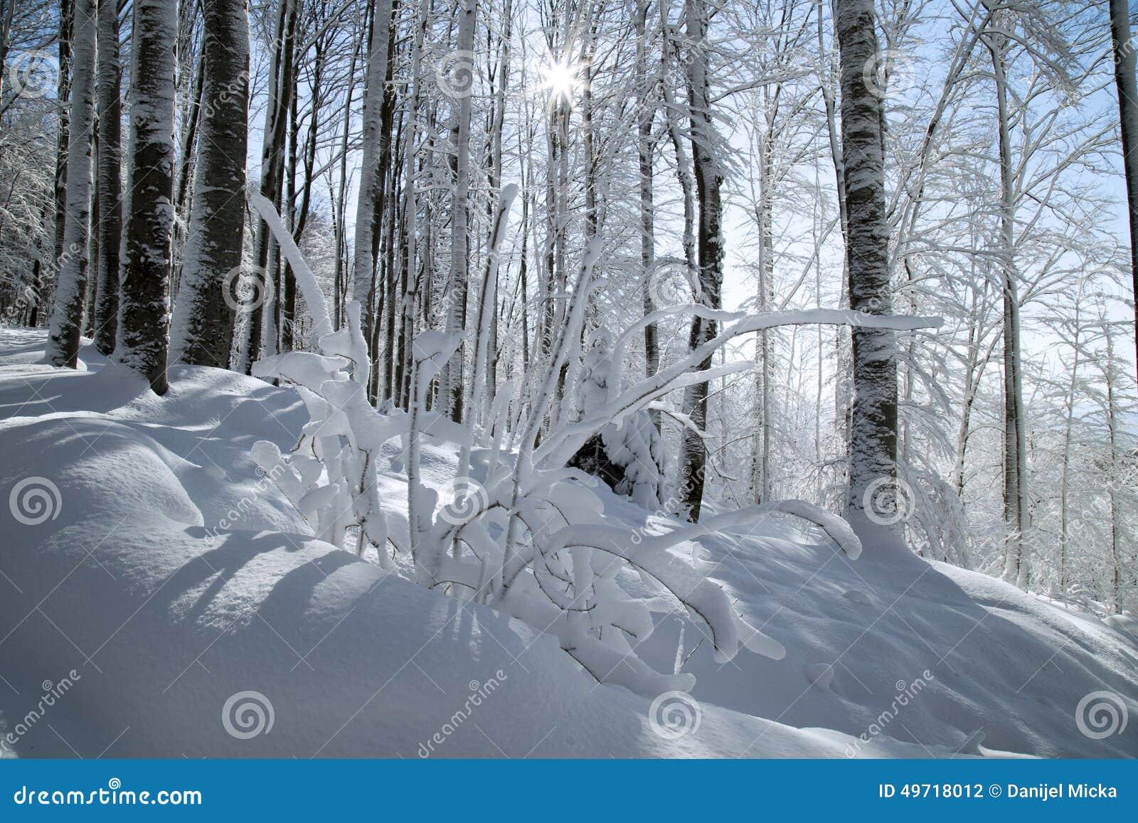 De struik van de winter