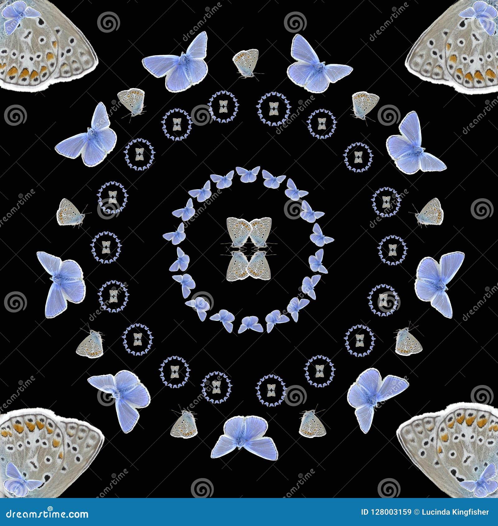 De symmetrie van Polyommatusicarus