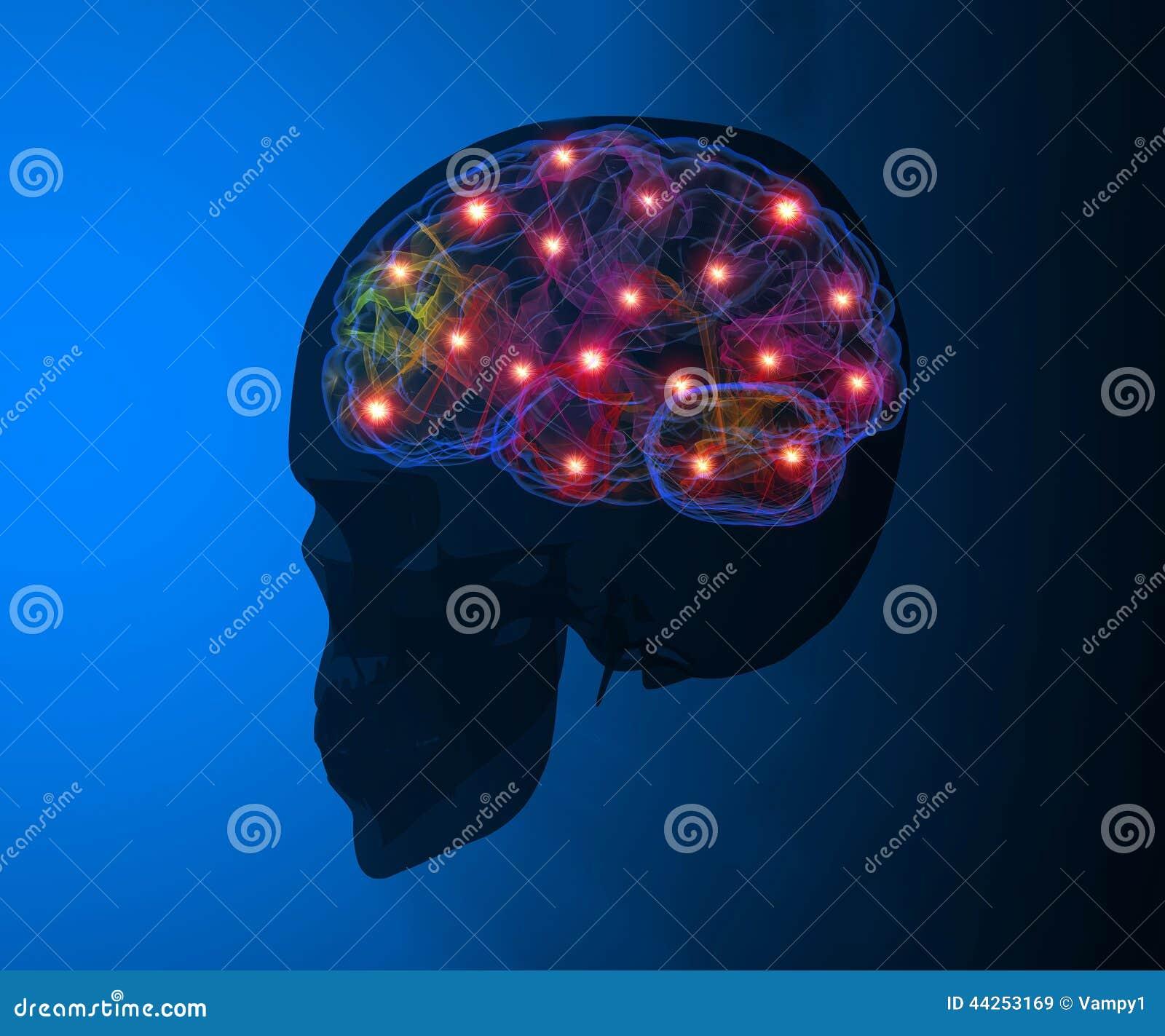 De synapsfuncties van hersenenneuronen