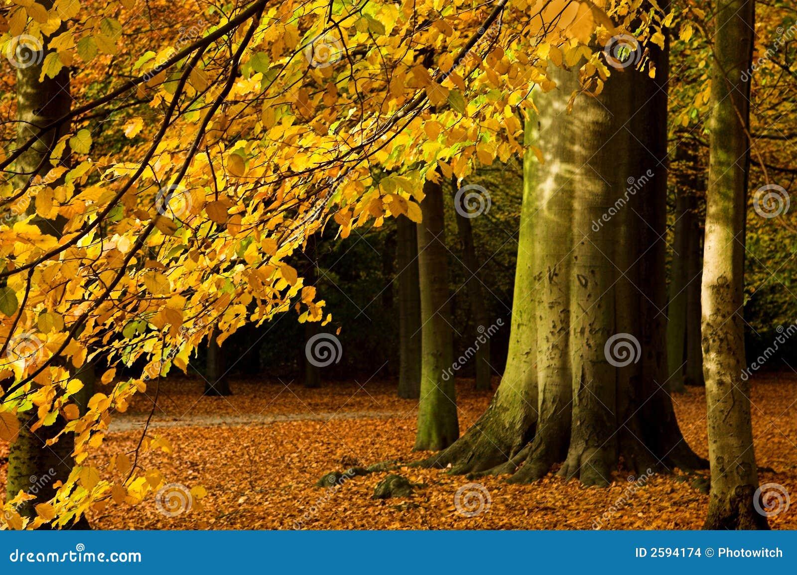 De tak van de herfst