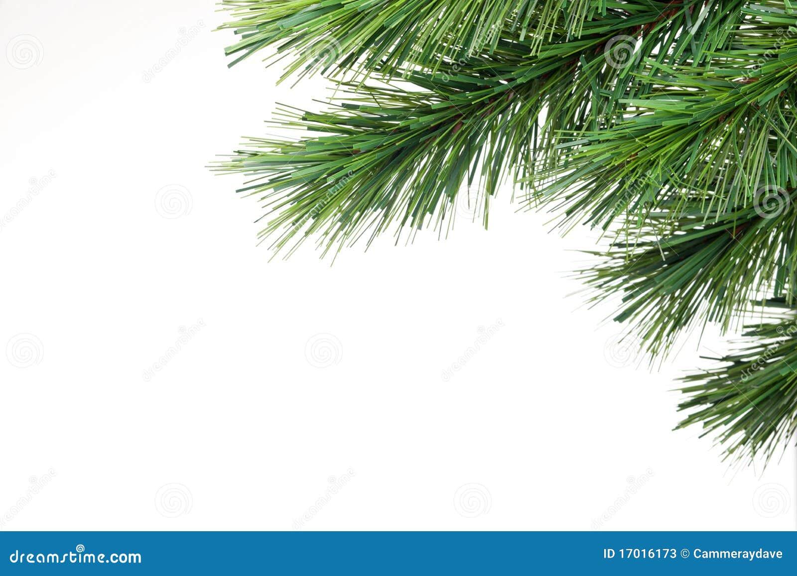 De Tak van de kerstboom