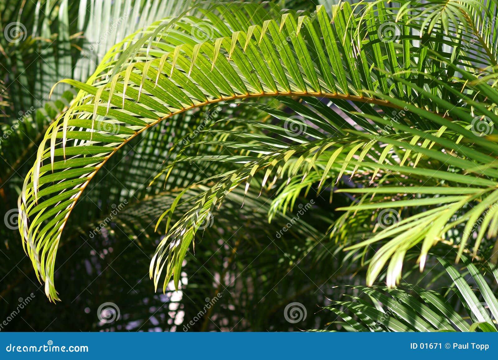 De tak van de palm