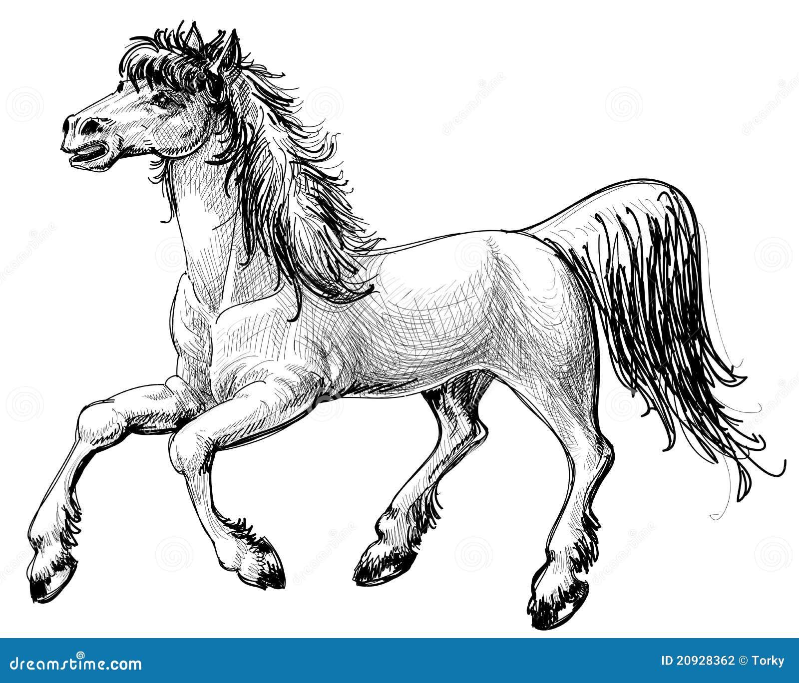 De Tekening Van Het Paard Stock Fotografie Beeld 20928362