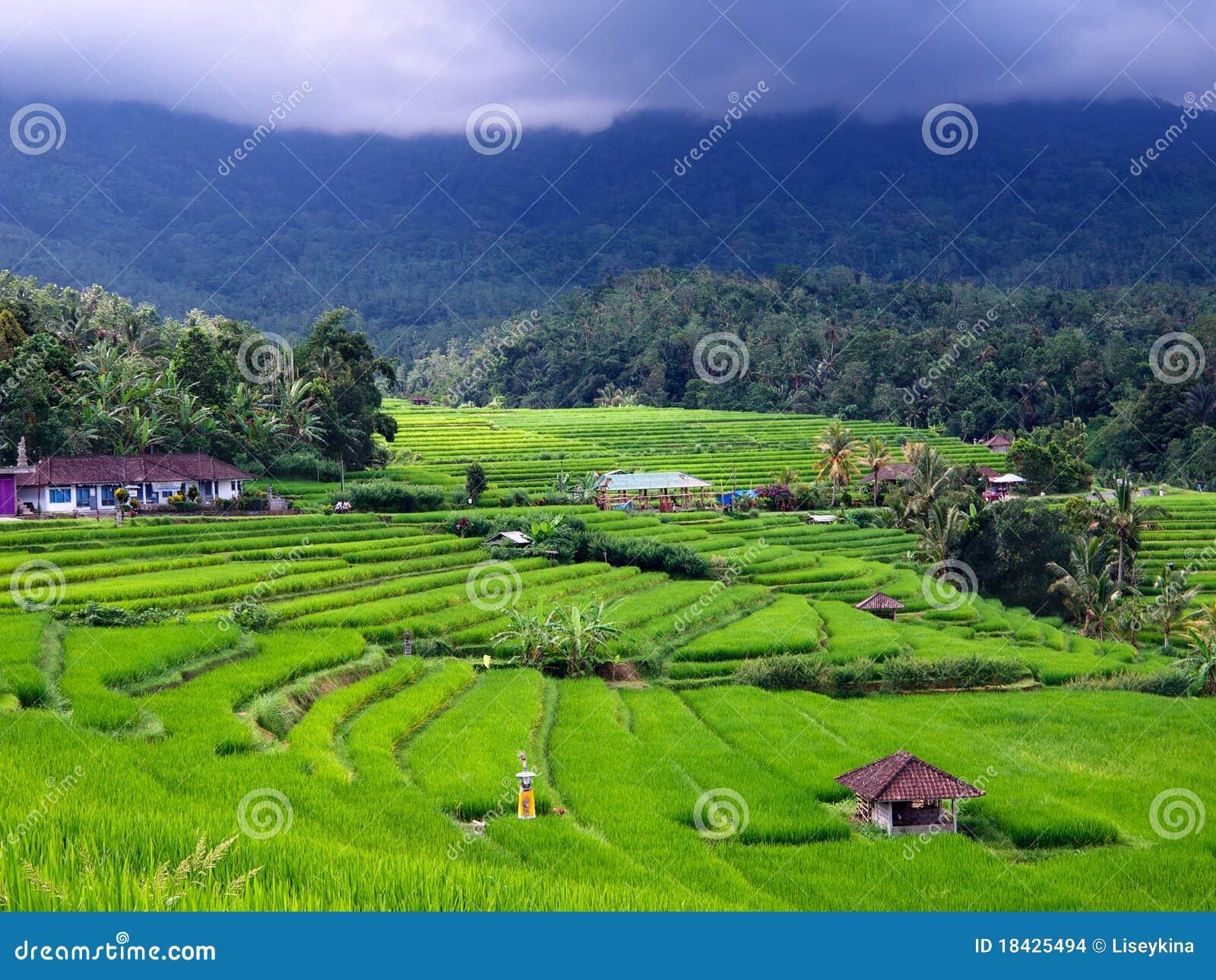 De terrassen van de rijst stock afbeeldingen afbeelding 18425494 - Afbeeldingen van terrassen verwachten ...
