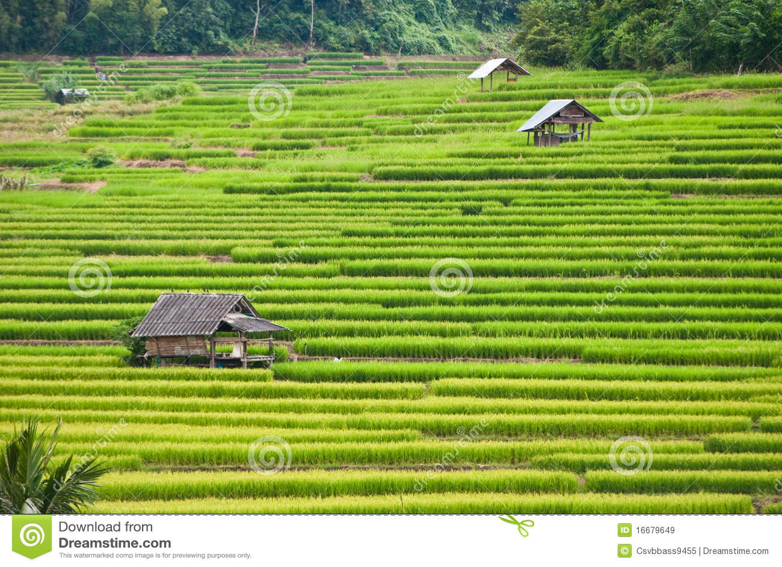 De terrassen van de rijst mea chame thailand royalty vrije stock afbeeldingen afbeelding - Afbeeldingen van terrassen verwachten ...
