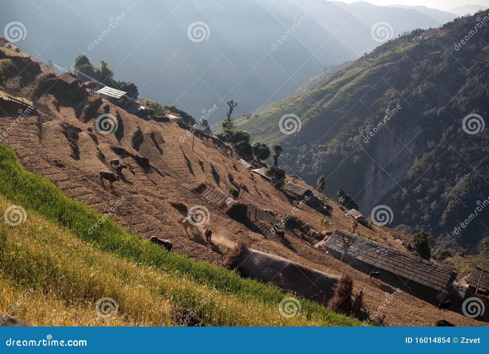 De terrassen van het padieveld in centraal nepal stock afbeeldingen afbeelding 16014854 - Afbeeldingen van terrassen verwachten ...