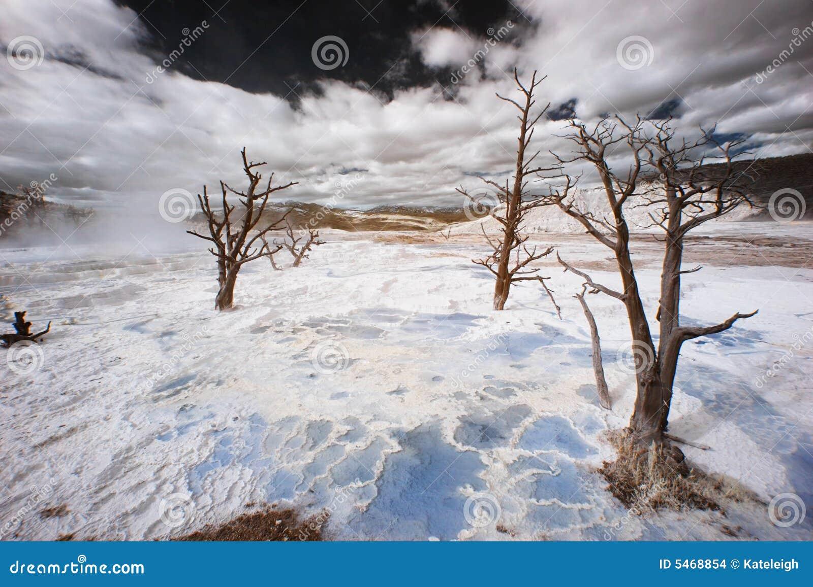 De terrassen van yellowstone infarred stock foto afbeelding 5468854 - Afbeeldingen van terrassen verwachten ...
