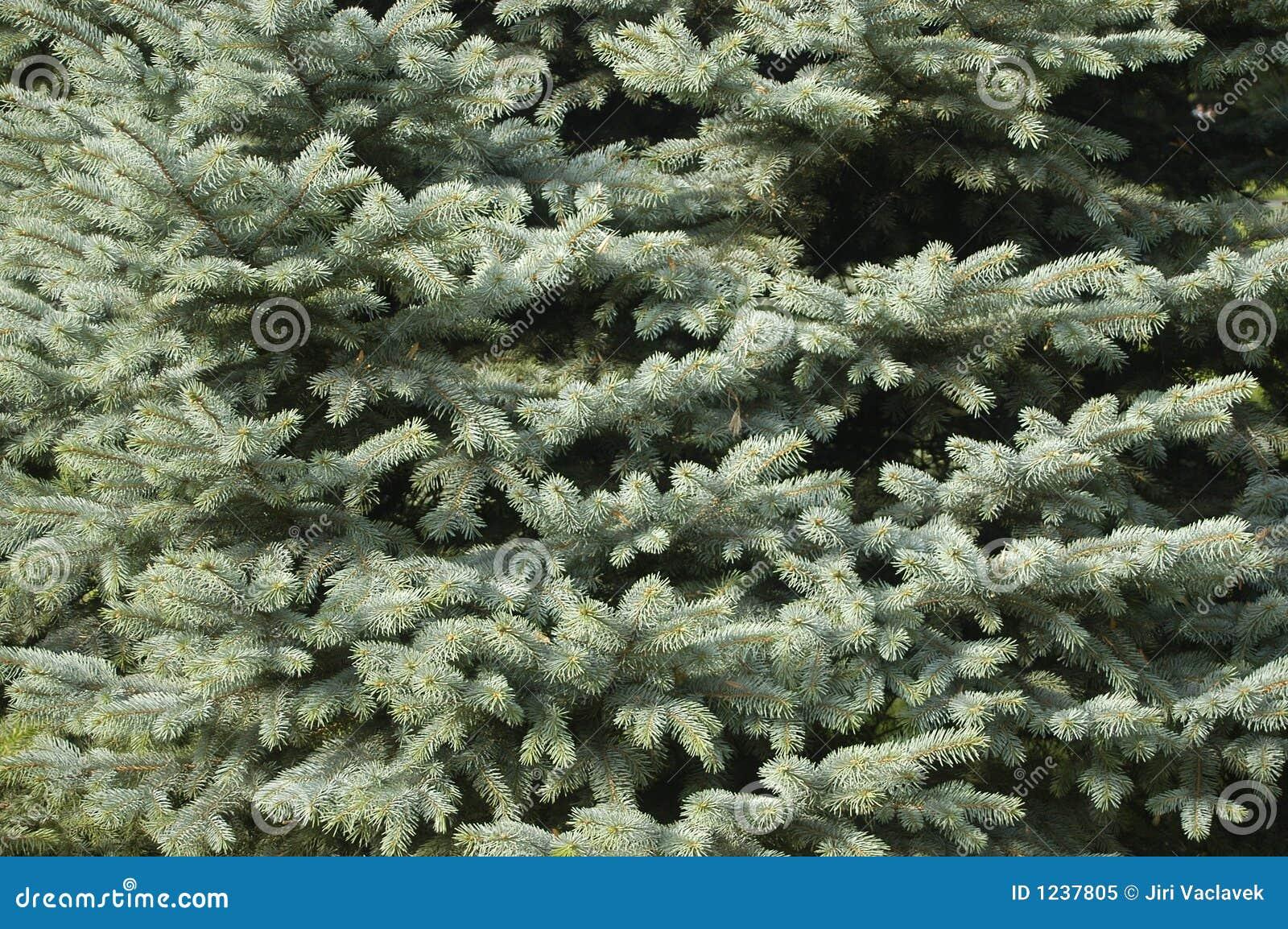 De textuur van Christmass