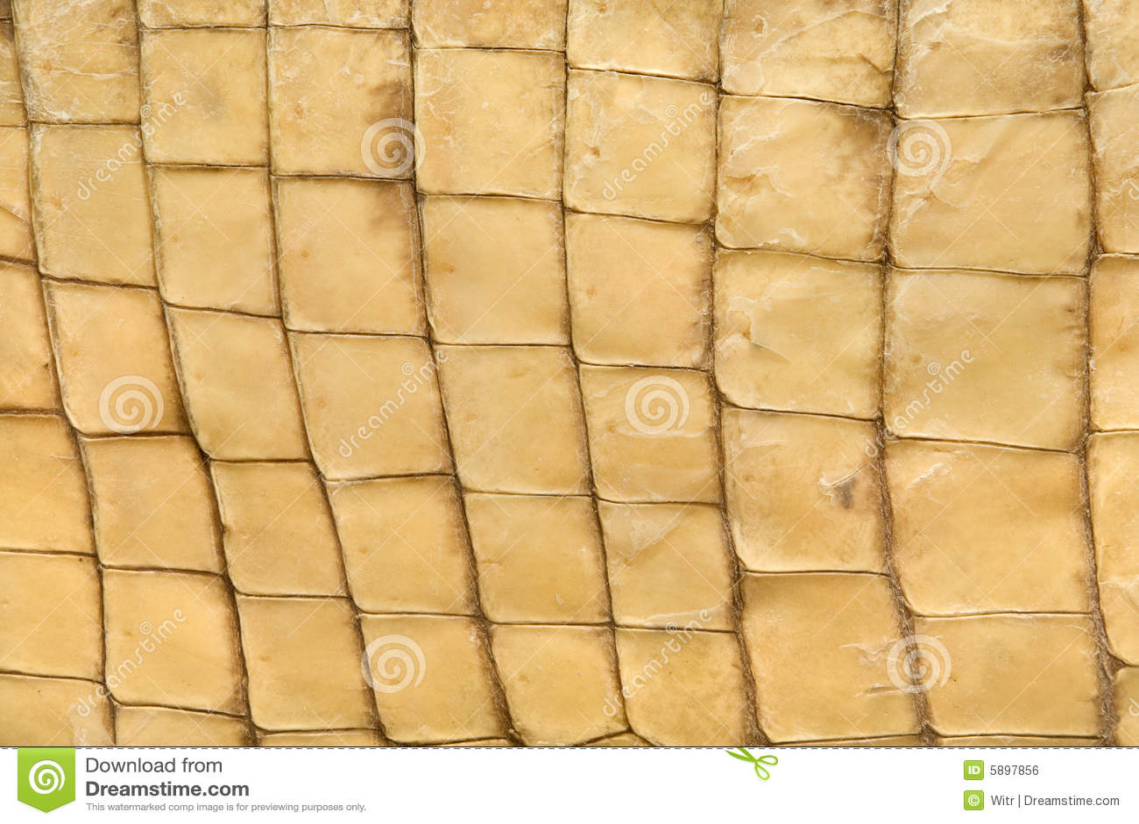 De textuur van de huid van krokodil
