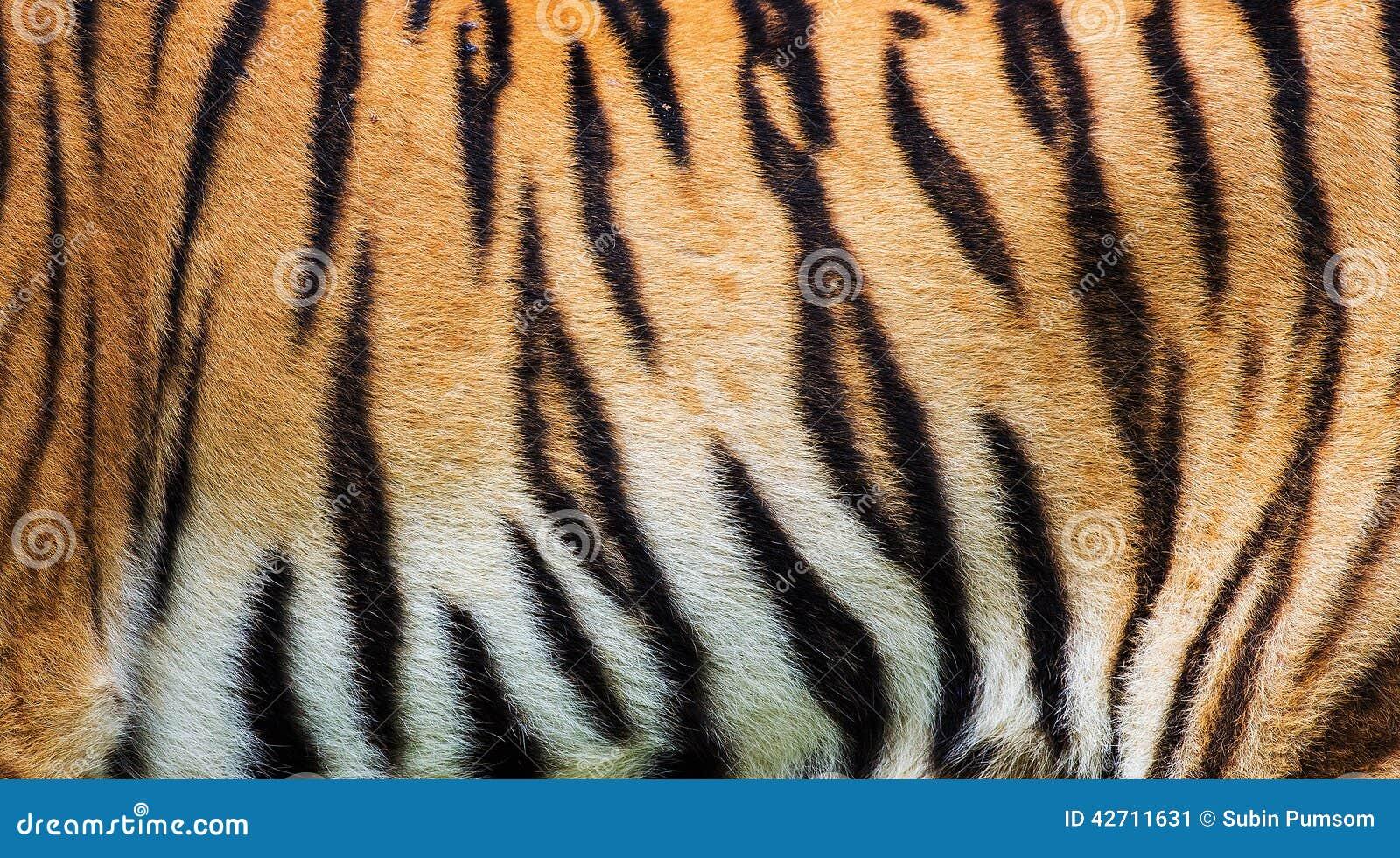 De textuur van de tijgerhuid
