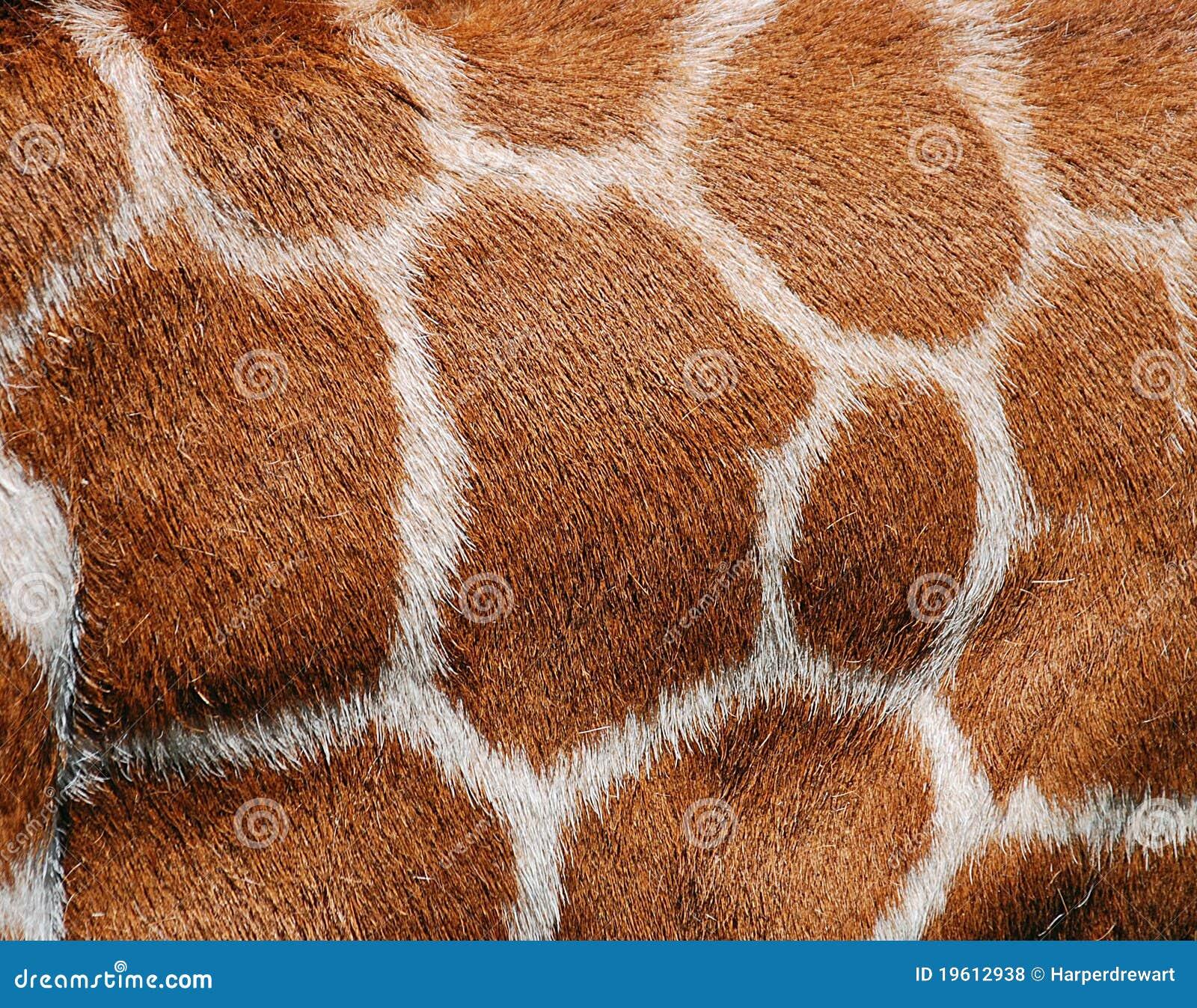 De Textuur van het Bont van de giraf