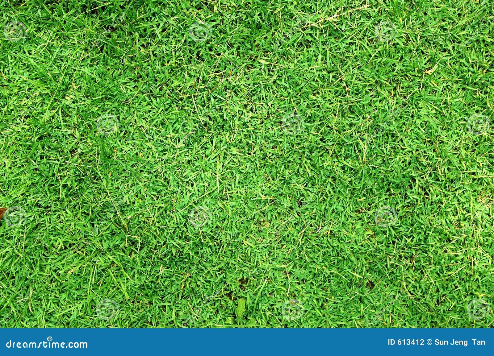 De textuur van het gras